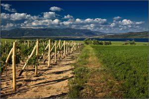 Bulgarin vine yards -good option for investment in Veliko Tarnovo